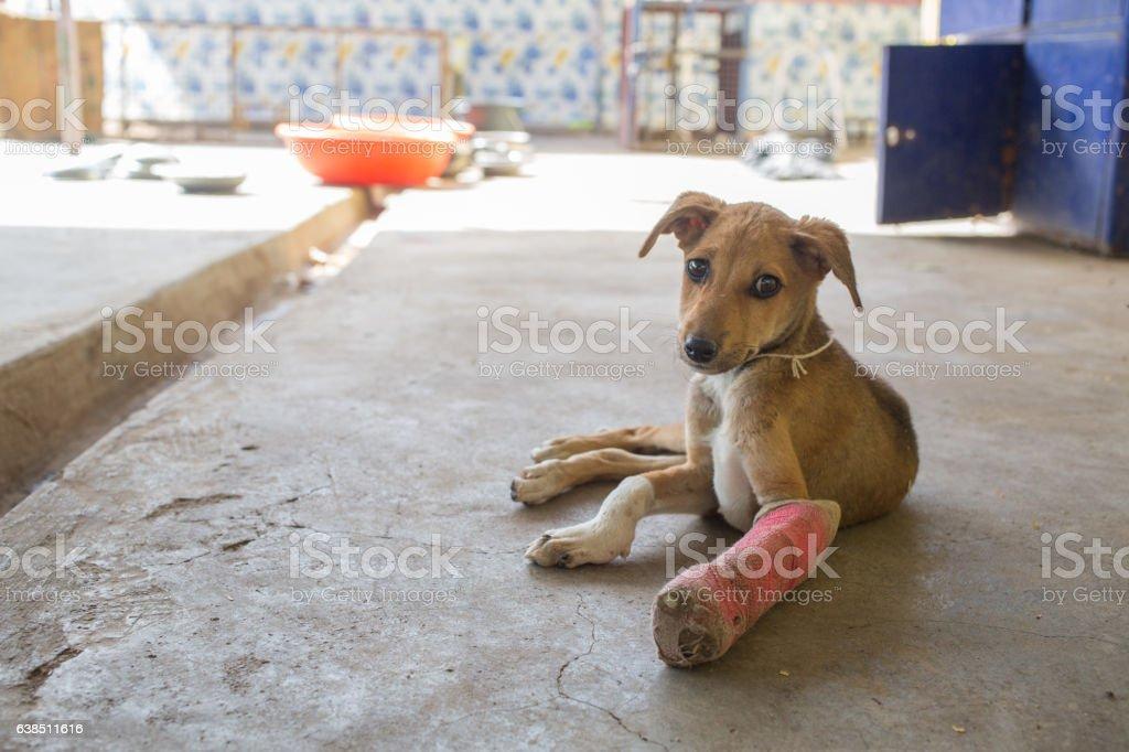 Dog_Broken_leg – Foto