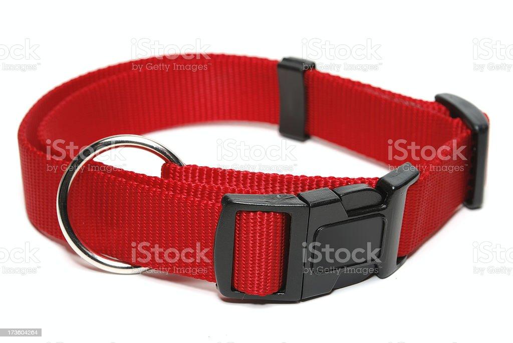 Dog-Collar stock photo
