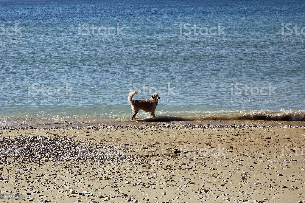 Dog'd Life royalty-free stock photo
