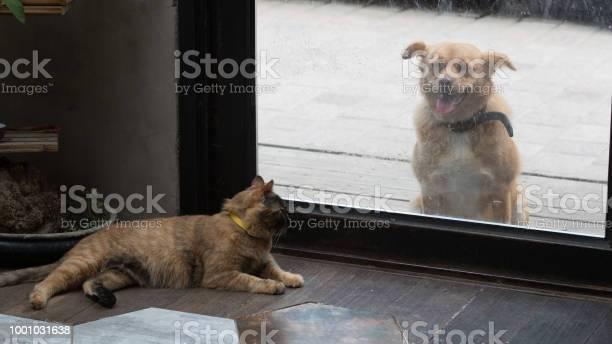 Doggie cat picture id1001031638?b=1&k=6&m=1001031638&s=612x612&h=jtarphfodlvl6iinps4ezva13zhgakwmj 5nqnwwnnq=