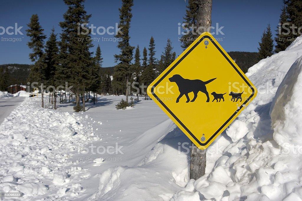 Señal de cruce de perros foto de stock libre de derechos