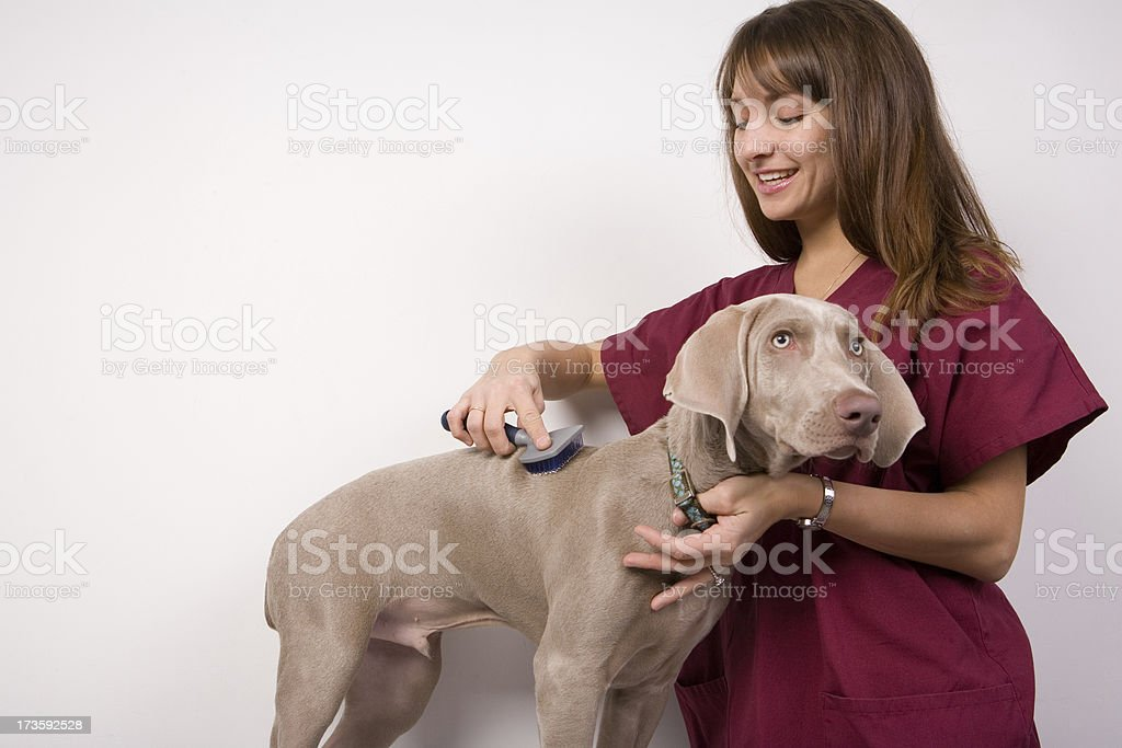 Doggie Grooming royalty-free stock photo