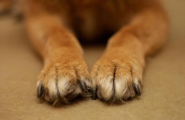 Doggie Paws stock photo