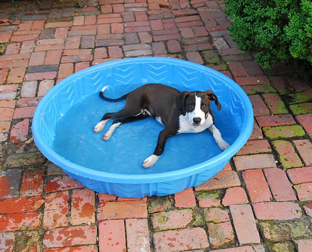 Doggie Pool stock photo
