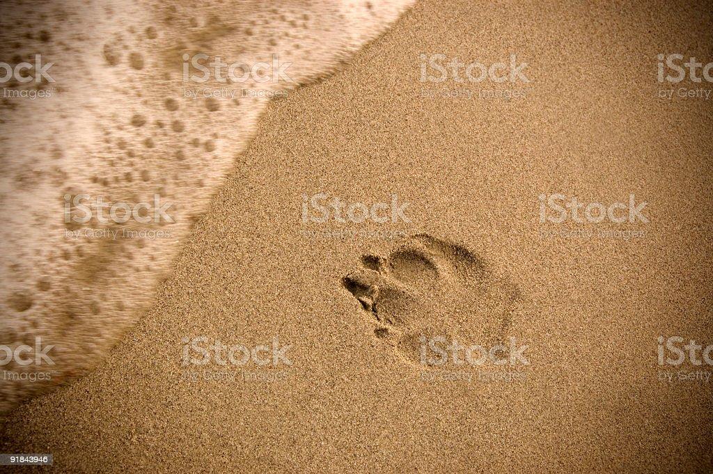 Doggy Beach Vacation royalty-free stock photo