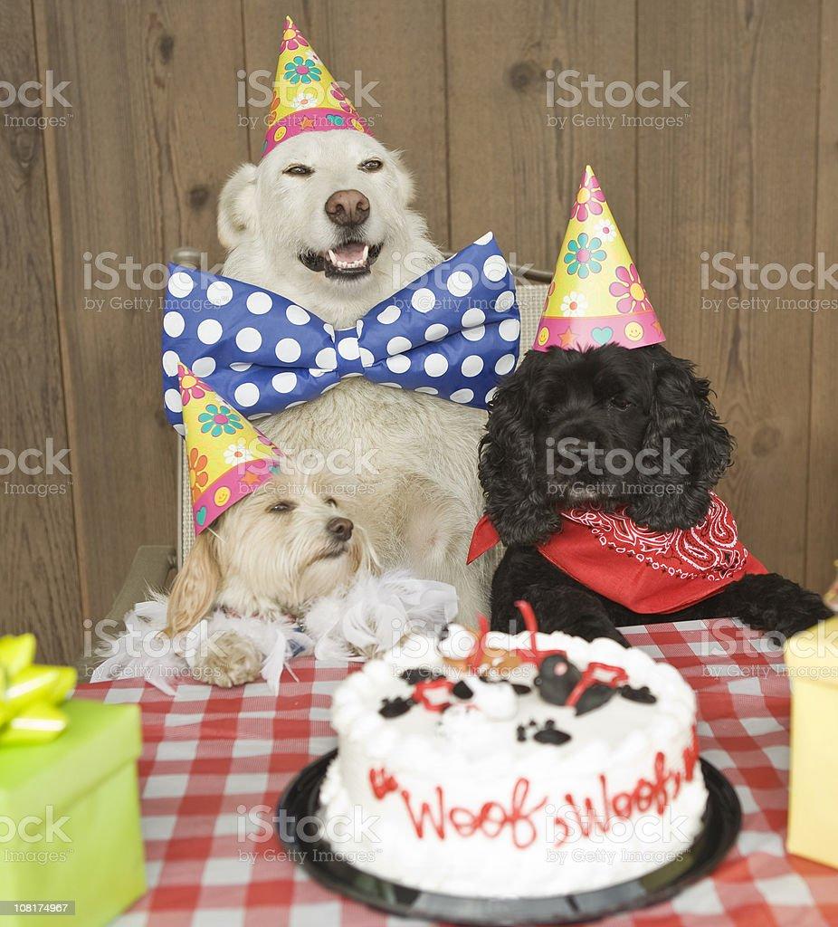 Doggy Birthday Party stock photo