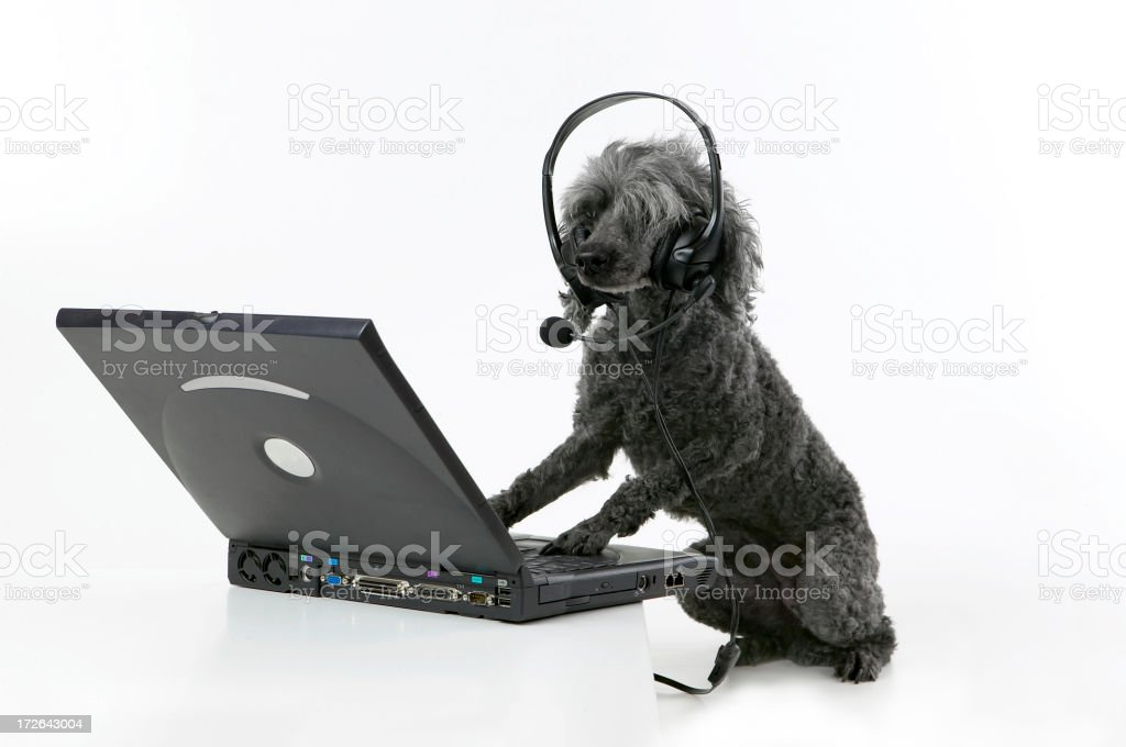 Doggy chat stock photo