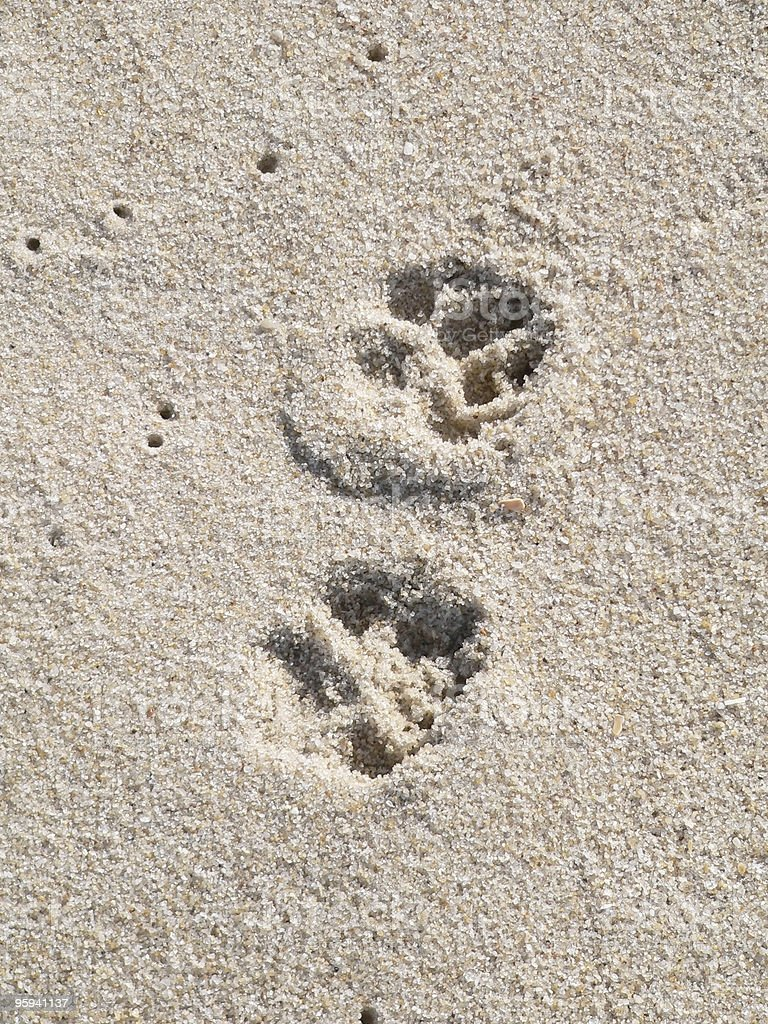 doggy footprints royalty-free stock photo