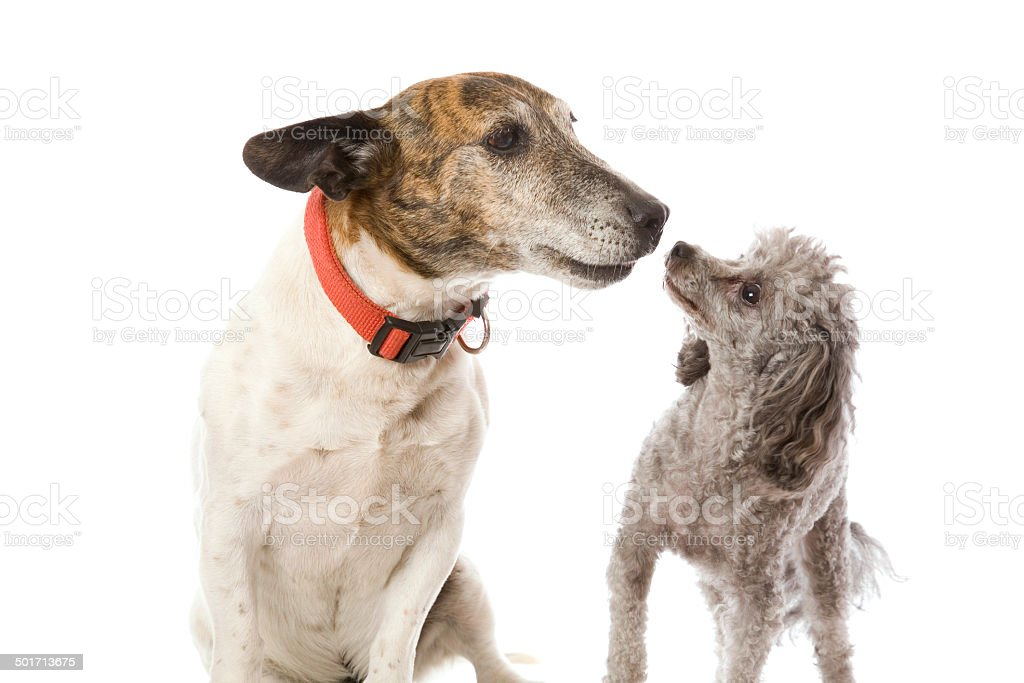 Doggy Friends stock photo