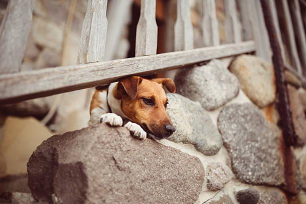 hundemotiven - hund unter treppe stock-fotos und bilder