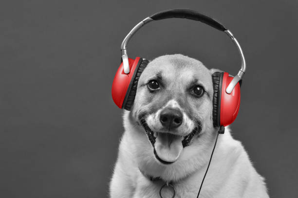 DJ Doggy. stock photo