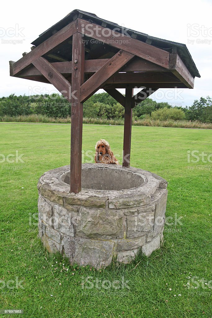 Doggy Wishes royalty-free stock photo
