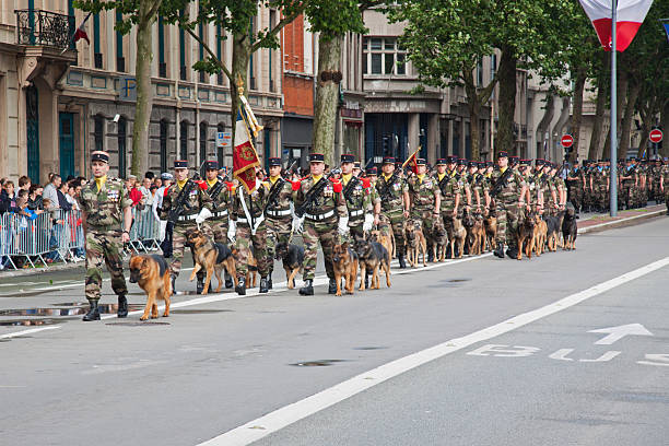 Dog-handler corps of the French military on parade, Lille Lille, France - July 14, 2012: Military dog-handlers and their charges marching in the annual parade to celebrate Bastille Day. Similar events take place in towns and cities across France mount combatant stock pictures, royalty-free photos & images