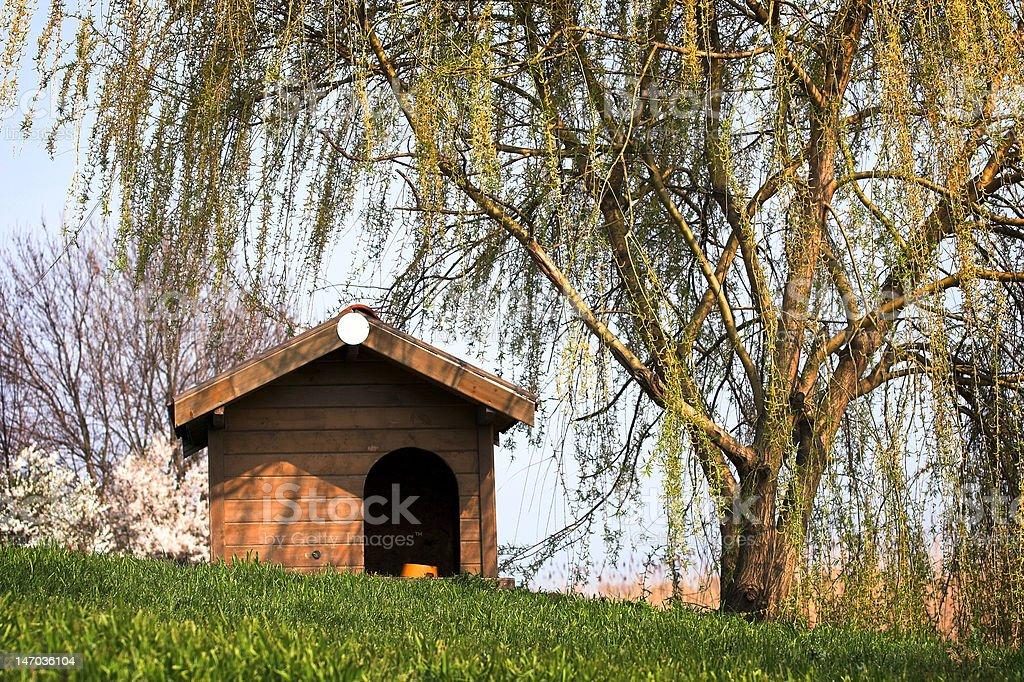 doghouse stock photo