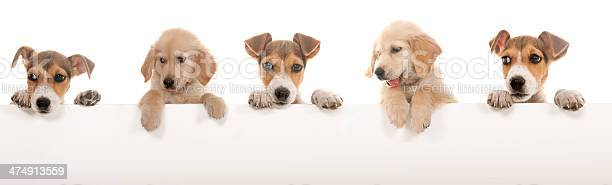 Dogs above white banner picture id474913559?b=1&k=6&m=474913559&s=612x612&h= 2t5lckr0 hg6aggy enz2nqbuvnco8 zmfvvkyleco=