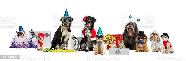 Dogs and a cat partying picture id512988019?b=1&k=6&m=512988019&s=612x612&h=imvxut0hbxbysskuyvdmf2ynzr4tx2wam woubuhyhg=