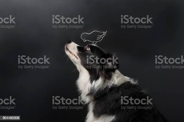 Dogs and birds are friends picture id904460306?b=1&k=6&m=904460306&s=612x612&h=vcknckvtyrpdnxcfnumj0epqq rgklwdkbtlfndmj a=