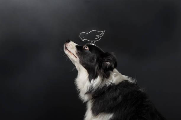 cães e aves são amigos - cachorro desenho - fotografias e filmes do acervo