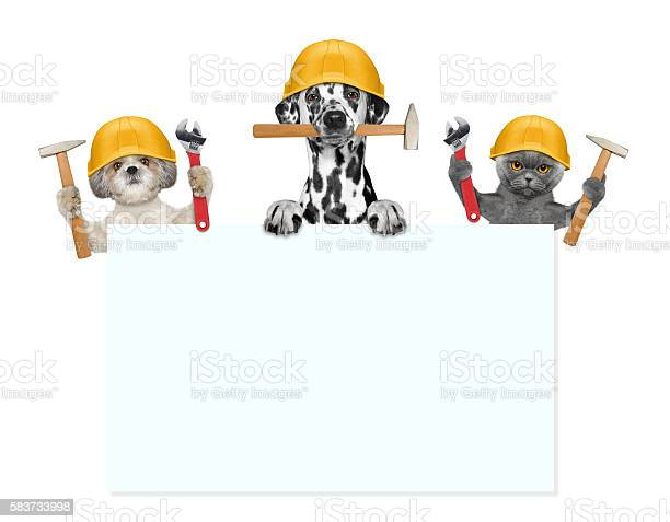 Dogs and cat builders holding tools in their paws picture id583733998?b=1&k=6&m=583733998&s=612x612&h=9s4elknihytxqvatmx5wir dkdfzib9jzl63xtxdxps=