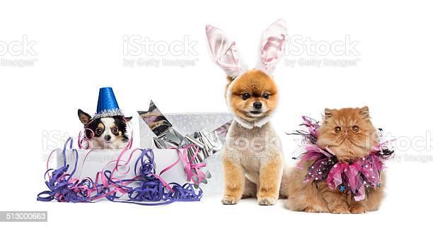 Dogs and cat partying picture id513000663?b=1&k=6&m=513000663&s=612x612&h=gd1mmtzexjzeedgurxatt87wd6wvte1sosngeqdv0uq=