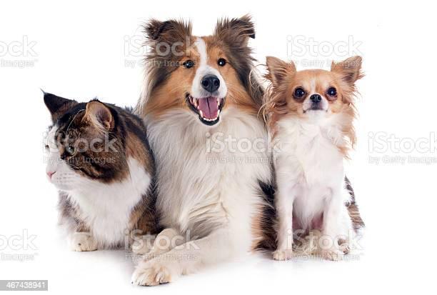 Dogs and cat picture id467438941?b=1&k=6&m=467438941&s=612x612&h=l8y9phcsqsctoo lm8 zybgihz nq7t0zz76hab9fpc=
