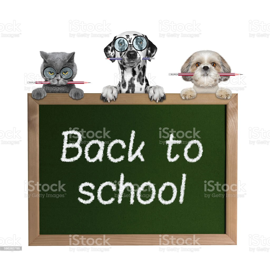 Dogs and cat pupils back to school stock photo