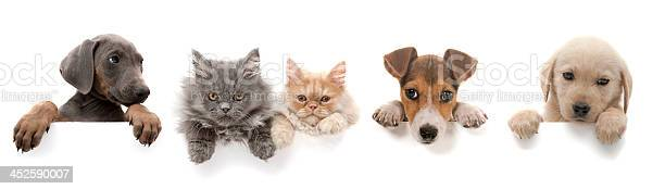 Dogs and cats above white banner picture id452590007?b=1&k=6&m=452590007&s=612x612&h=rpeahjwa4uh0cpnzch6eezto6ekmjx2fkyzjllnaksk=