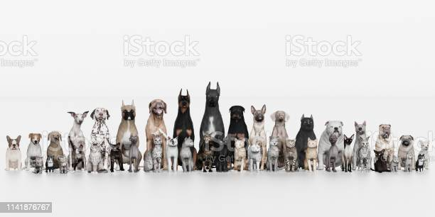 Dogs and cats all pets sitting together front view 3d render picture id1141876767?b=1&k=6&m=1141876767&s=612x612&h=x6o4 kszcmhdn5qmtoqvhntgq68bu3ixqtrmooomi6s=