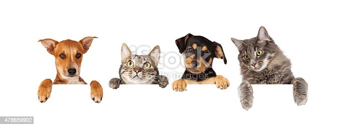 istock Dogs and Cats Hanging Over White Banner 478659902