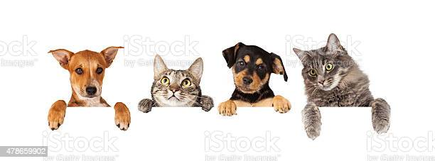 Dogs and cats hanging over white banner picture id478659902?b=1&k=6&m=478659902&s=612x612&h=gxjs0waslvxkn9ei2cr371wr5ul5q1z4br5uhhmocne=