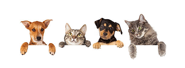 Dogs and cats hanging over white banner picture id478659902?b=1&k=6&m=478659902&s=612x612&w=0&h=o 2qj stfajawhzxqotlb2gggucz1f53btcqxrgmof8=