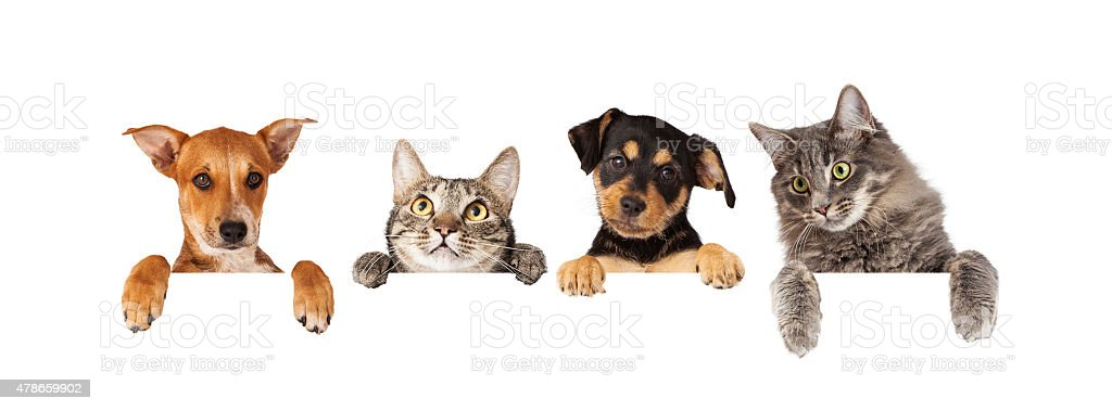 Dogs and Cats Hanging Over White Banner stock photo