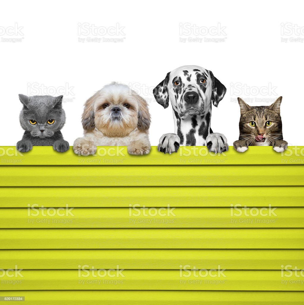 dogs and cats look through a fence stock photo