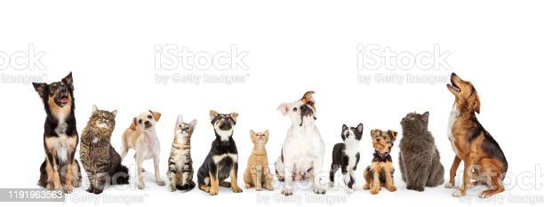 Dogs and cats looking up into web banner picture id1191963563?b=1&k=6&m=1191963563&s=612x612&h=vu2tcjuqubncndcps9p6fc7ffl4rltgkwnk6c0mod24=