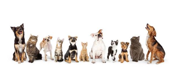 perros y gatos mirando hacia el estandarte web - mascota fotografías e imágenes de stock
