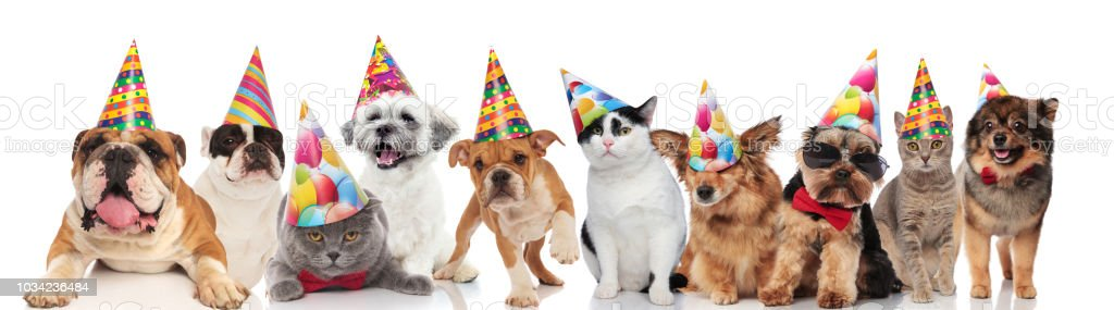 Dogs And Cats Of Different Breeds Wearing Colorful Birthday Hats Royalty Free Stock Photo