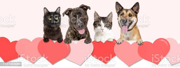 Dogs and cats over valentines day hearts web banner picture id1127453084?b=1&k=6&m=1127453084&s=612x612&h=bg5xjhz01qvvfwxuolwxozuhily70g4dpv2ax73bskg=