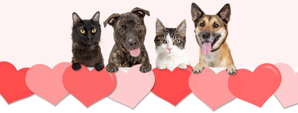 Dogs and Cats Over Valentines Day Hearts Web Banner stock photo