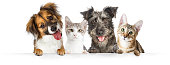 istock Dogs and Cats Paws Over Website Banner 1006341420