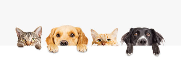 dogs and cats peeking over web banner - dog stock pictures, royalty-free photos & images