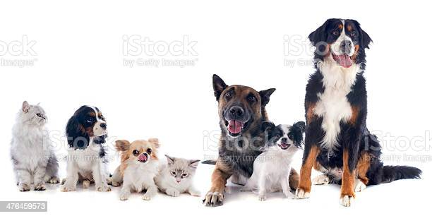 Dogs and cats picture id476459573?b=1&k=6&m=476459573&s=612x612&h=vnxn821gpeaolniell4 goveyrpy0xpoc9l6pc9o1ji=