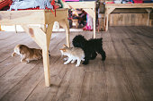 istock Dogs and cats playing together. 646954588