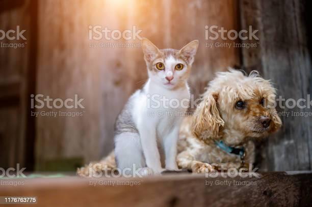 Dogs and cats sit together and staring forward picture id1176763775?b=1&k=6&m=1176763775&s=612x612&h=xrsabtnpf5rvqjrkhpxglu7zqvsh lltkgun81f7nei=