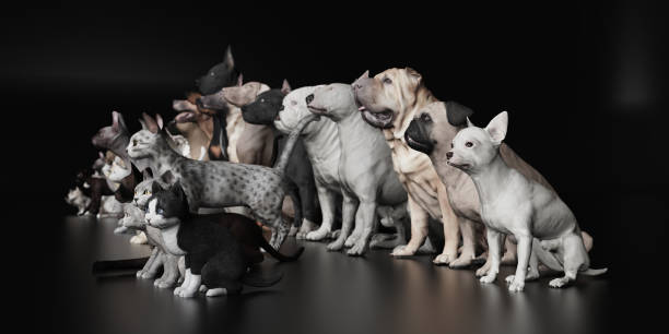 Dogs and cats sitting together in studio 3d render picture id1141876773?b=1&k=6&m=1141876773&s=612x612&w=0&h=lz6jlvs6scbw756ivd5 qp lhqcesgd9xozjxzfesrk=