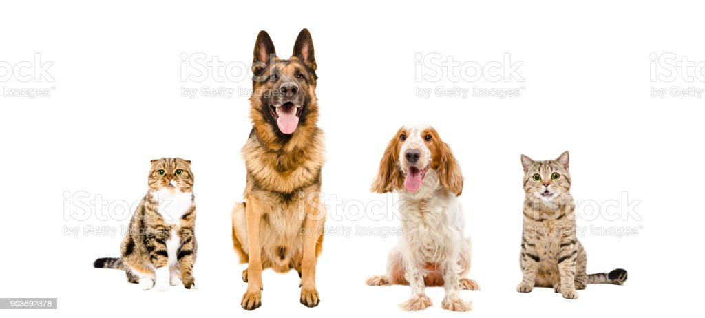Dogs and cats sitting together stock photo