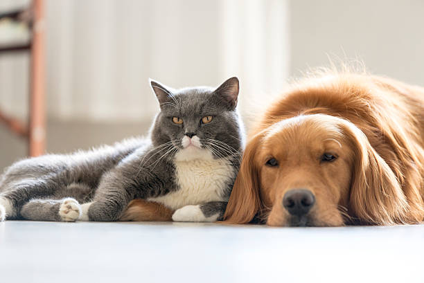 Dogs and cats snuggle together - foto de stock