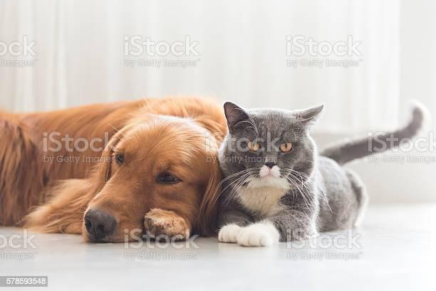 Dogs and cats snuggle together picture id578593548?b=1&k=6&m=578593548&s=612x612&h=axostzlbugl6tfkghbohf7jom  jhty01dqf7fjax58=