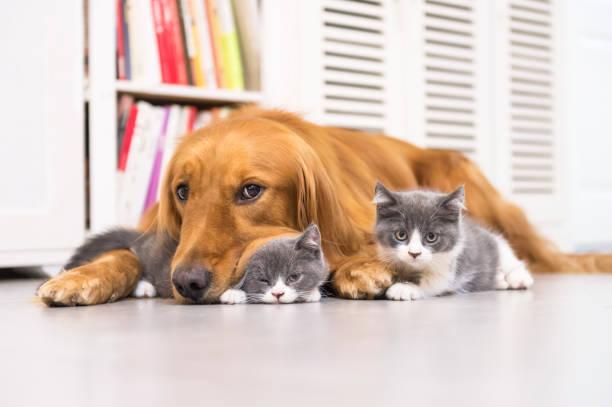 Hunde und Katzen, innen eingenommen – Foto