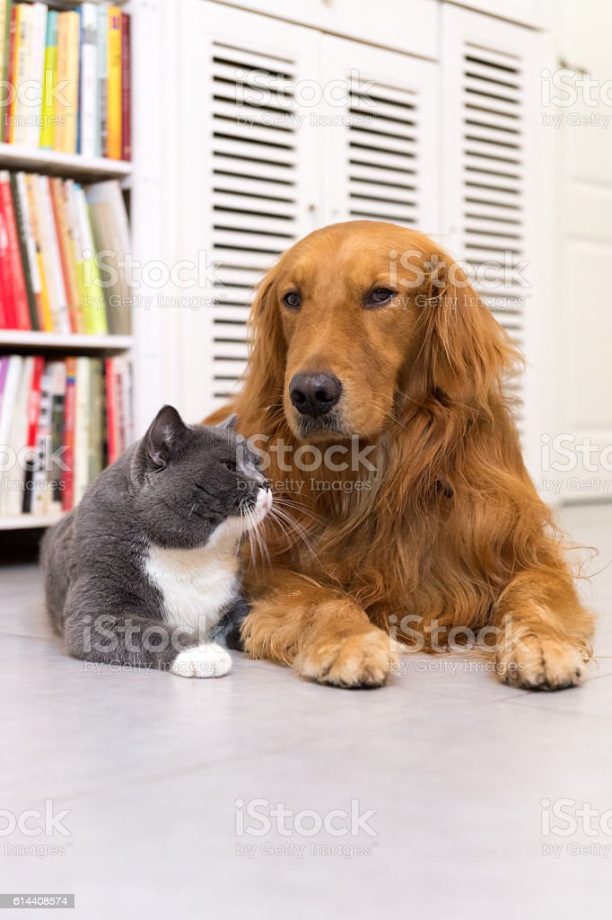 Dogs and cats, taken indoors foto royalty-free