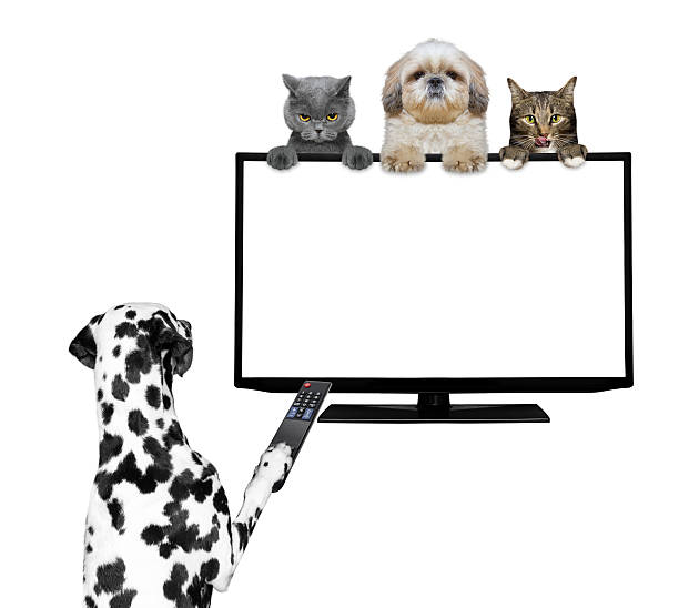 Dogs and cats watching television picture id541120006?b=1&k=6&m=541120006&s=612x612&w=0&h=aqotlpvdb2kdgtqddh z2tvx1d x lvyfhknp gnm a=